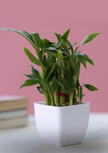 online plant store india